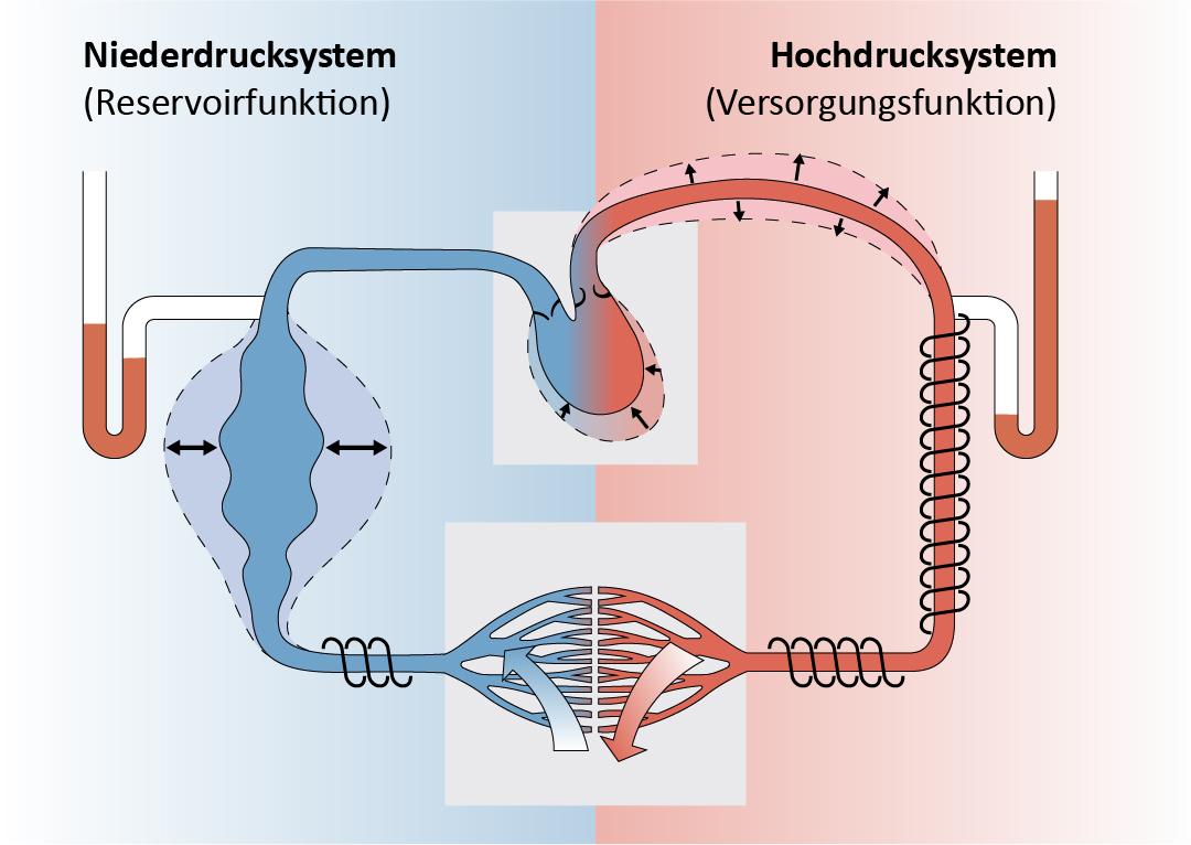 Niederdruck- und Hochdrucksystem Herz-Kreislauf-System