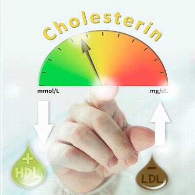 Cholesterin Herz-Kreislauf-System