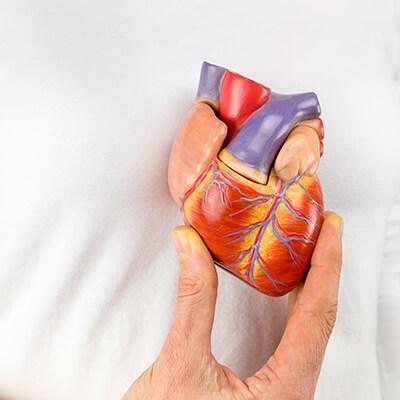 Herzmuskelentzuendung Herz-Kreislauf-System