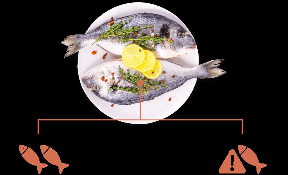 Omega 3 - Fisch